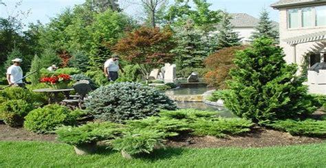 conifere nane da giardino il bosco in casa un oasi di verde con le conifere nane