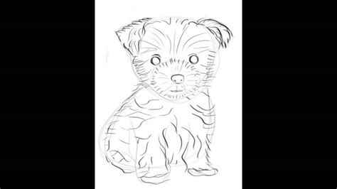 how to draw a yorkie easy how to draw a terrier