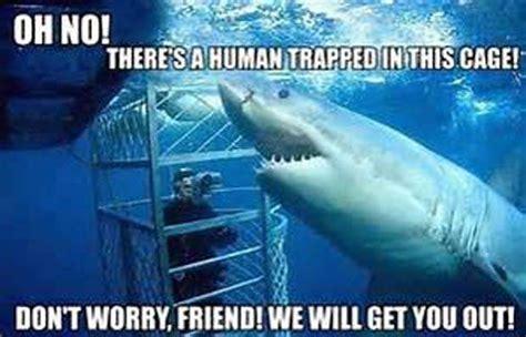 Shark Week Meme