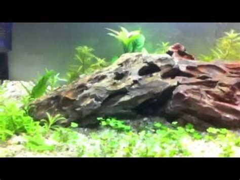 how to set up an aquascape dragonstone aquarium youtube