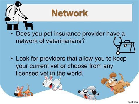 Top 10 Things To Look For In Your Pet Insurance Provider