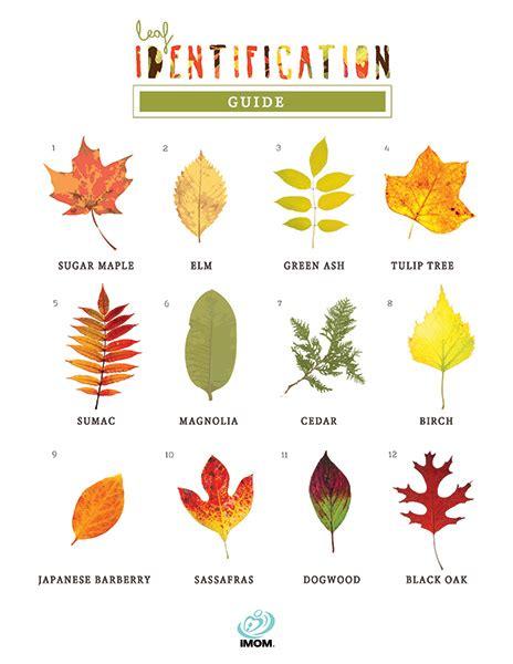 leaf identification game imom