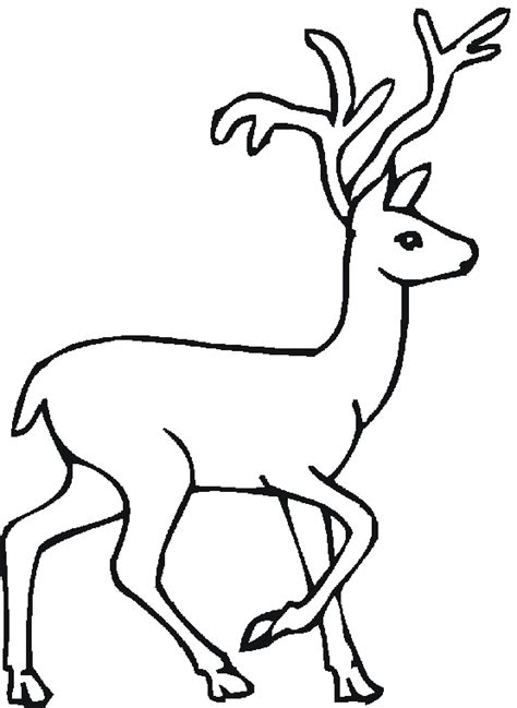Cartoon Forest Animal Coloring Pages Coloring Pages Forest Animals Coloring Page