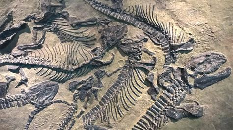 Fossil New two new dinosaur fossils discovered in china www