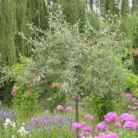 mediterrane pflanzen für den garten mediterrane pflanzen perfekt imitiert mein sch 246 ner garten