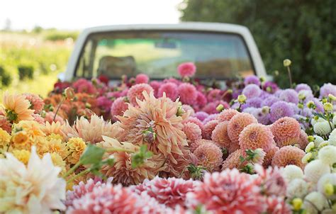Best House Gifts by Dahlia Planting With Floret The Blog At Terrain