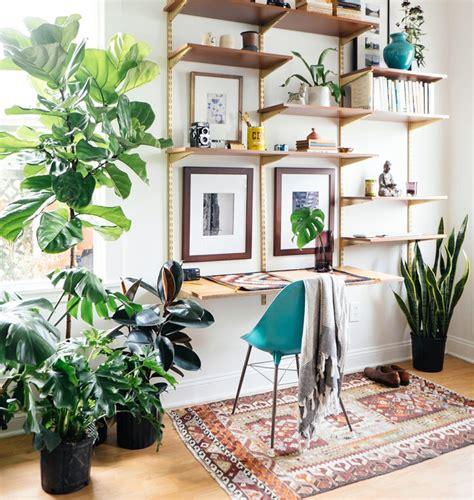 piante da arredamento arredamento piante profumo verde idee casa