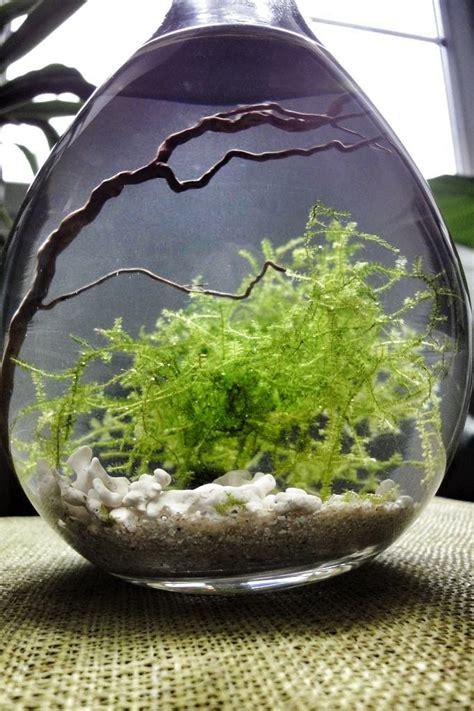 best 25 water terrarium ideas on terrarium