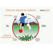 Educarchile  Ciclo Del Dioxido De Carbono
