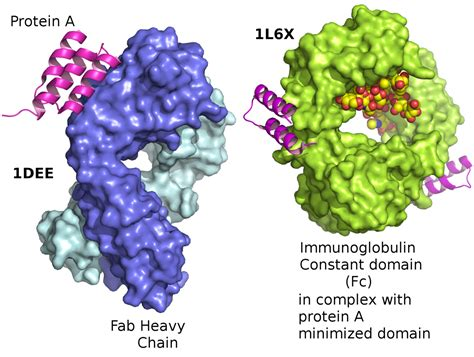 protein l binding protein a