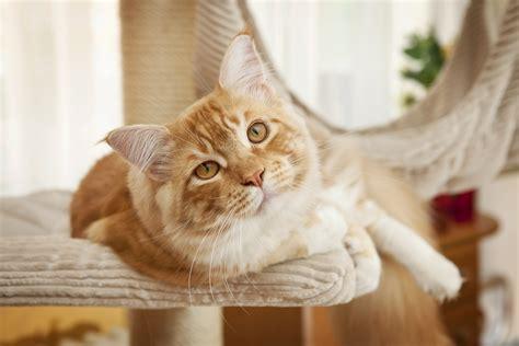 gatti in casa gatti in casa ambiente consigli