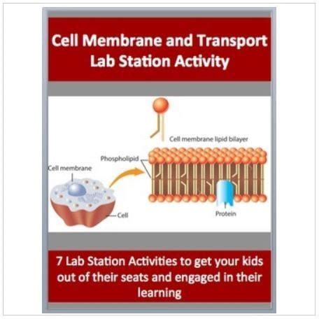 cell membrane  transport  engaging lab station