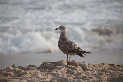 gabbiano uccello immagini mare uccello marino natura gabbiano