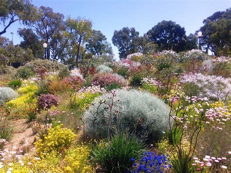 western australia australian native plants nursery australian native garden pinteres