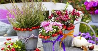 pflanzen für garten chestha garten herbstdeko design