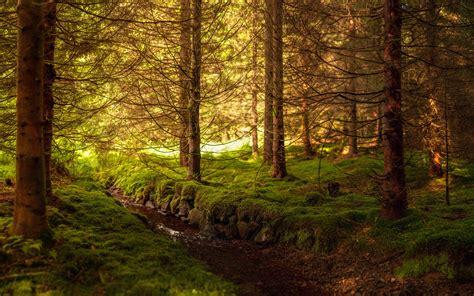 imagenes de sustitucion html fondo de pantalla bosque rio hd