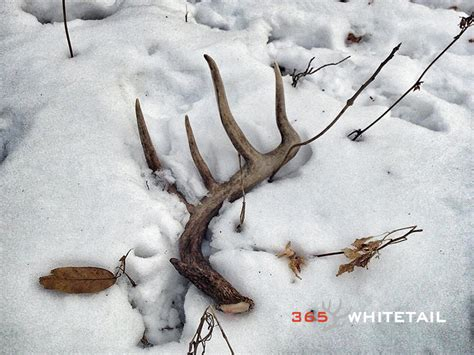 how to a to shed hunt kaden schlipf s shed tips 365 whitetail