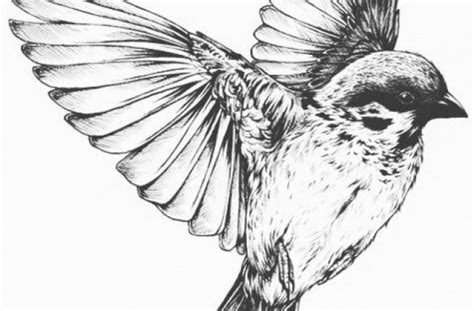 bird flying drawing birds pinterest sparrow tattoo design