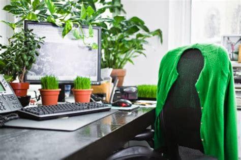 Meja Untuk Kantor tanaman hias untuk meja kantor dapat kurangi stress