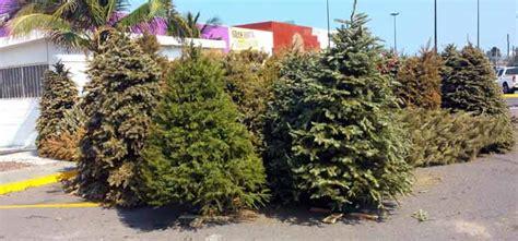 tiendas de walmart recibir 193 n 193 rboles de navidad para