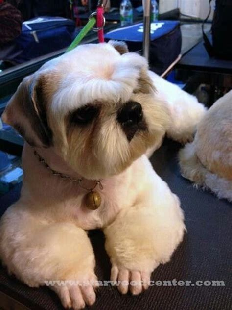 dog grooming grooming different dog breeds shih tzu dog grooming styles hairstylegalleries com
