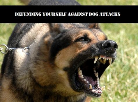 best attack dogs defending yourself against attacks ready4itall