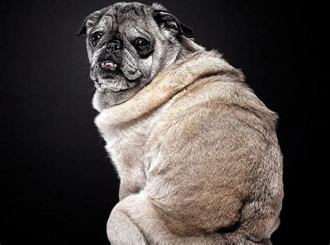 beautiful photographs part one learning from dogs senior dogs are still cute lovable cuteness overflow