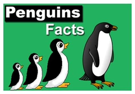 penguin facts for exciting facts about penguins facts about animals volume 18 books interesting facts about galapagos penguins f f info 2017