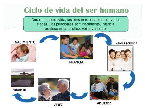 imagenes del ciclo de la vida humana ciclo de vida del ser humano ciclo de vida