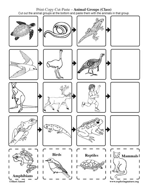 printable animal groups animal groups cut and paste