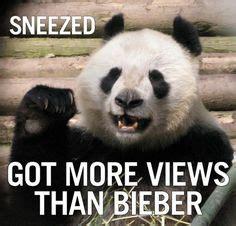 Sneezing Panda Meme - pandas on pinterest 34 pins