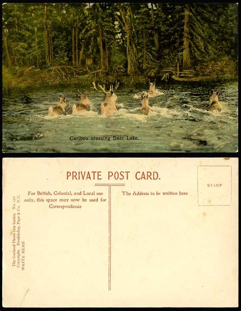 Canada Search Email Canada Postcard Reindeer Caribou Crossing Deer Lake Garland Photo Iris Serie For Sale