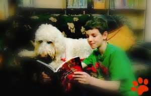 pawsitive pals books pawsitive reading lass