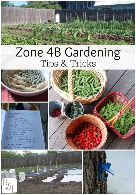 Zone 9 Gardening - 25 best zone 9 gardening ideas on
