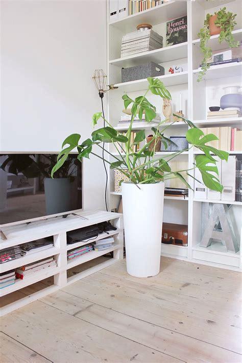 pianta soggiorno piante da soggiorno estetica e design il giardino di veca
