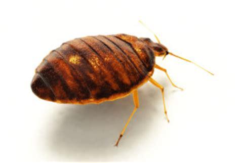 bed bug exterminator nj bed bugs nj exterminator all seasons pest control
