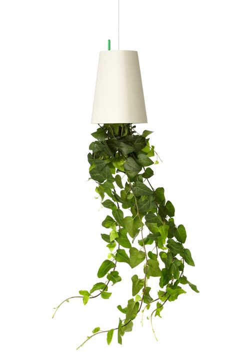 best small hanging plants hanging plants indoor ergonomic elegant and stylish