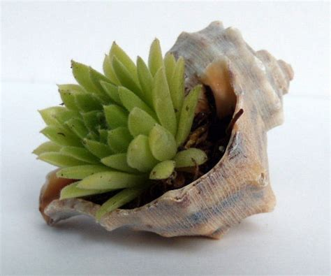 diy seashell projects diy projects with seashells
