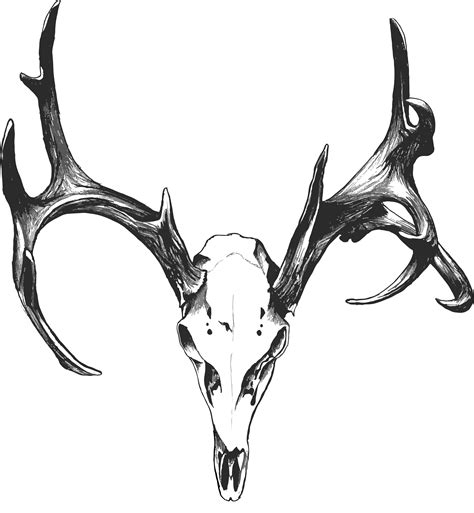 deer skull tattoo deer skull tattoos search tattoos