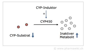 induktor cyp3a4 pharmawiki cytochrome p450 cyp