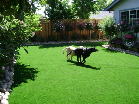 dog in backyard beautiful landscaping ideas for small backyards with dogs