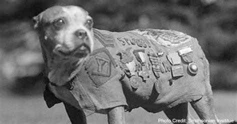 How Sergeant Stubby Died 6 Historic Dogs Who Gave Everything For Their Country Freekibble