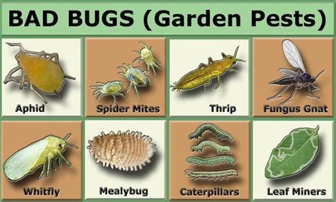 Gardens Pest by Garden Pests In The Garden Gardens Charts