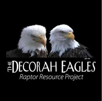 53 best images about decorah eagles on pinterest