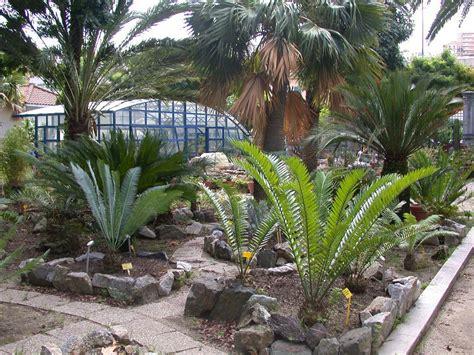 lione da giardino giardino con le palme 20 idee per un tocco tropicale