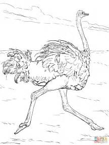 ostrich coloring page ostrich runs coloring page free printable coloring pages