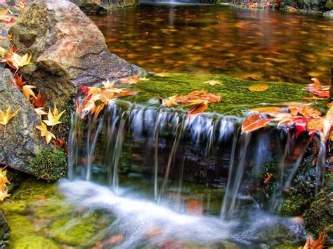 beautiful butchart gardens waterfall nature scenery