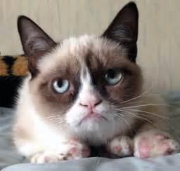 11 grumpy cat pictures hilarious grumpy cat gallery everyjoe