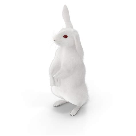 white rabbit png images psds   pixelsquid