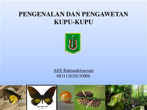 Cd Link Kupu Kupu pengenalan dan pengawetan kupu kupu